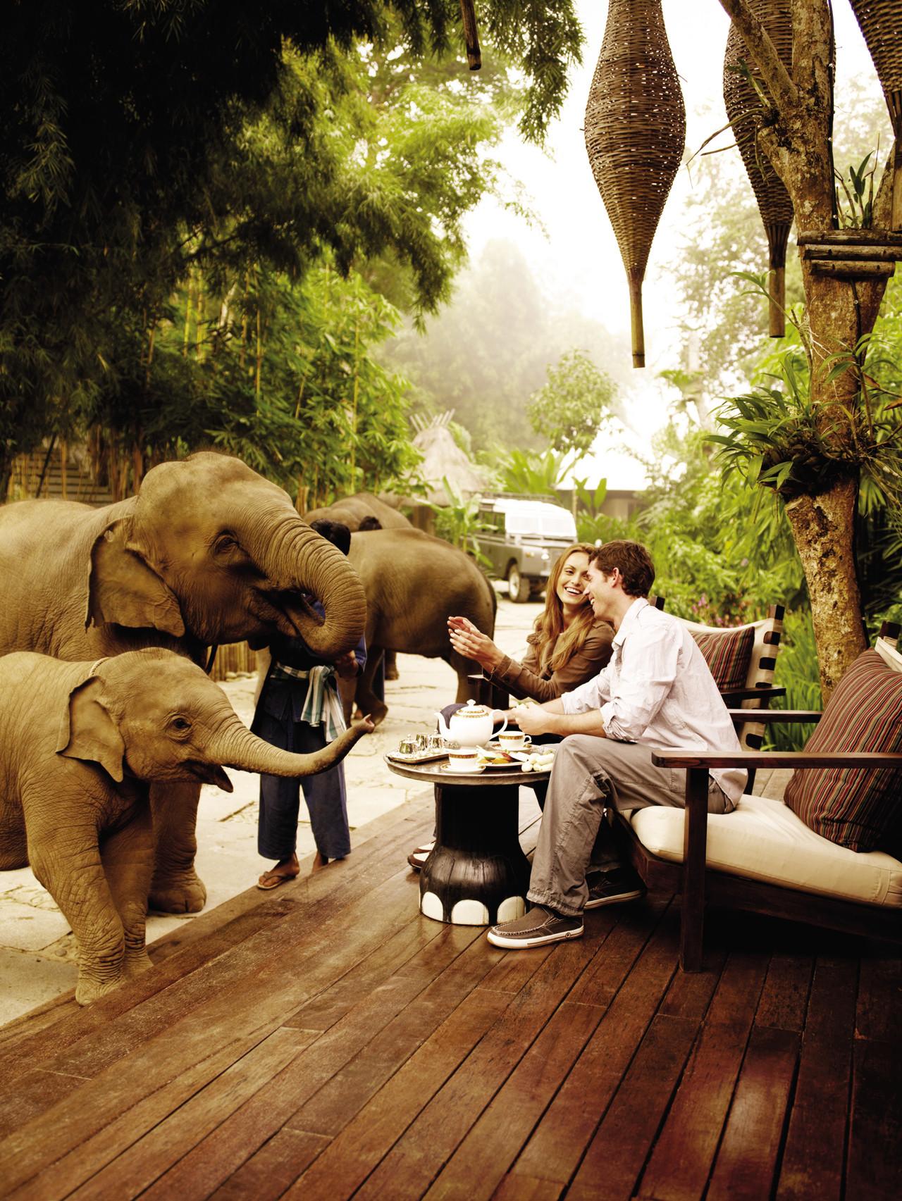 Os elefantes e a análise de risco